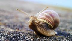 big snail (Nisse Nilsson) Tags: sunset sea sun macro building art sol nature water car animal garden landscape grey skåne nikon europa europe sweden harbour schweden skandinavien konst sverige scandinavia vatten hav djur d300 öresund suéde svezia hamn hven landskrona 4nikon300mmvr2f2 sportxtremextrempornobabebwblackwhitenikon1424mmnikon2470mmnikon70200mmnikon50mmf1 schwedensuédesverigesveziaswedeneuropaeuropéscandinavinskandinavienskånelandskronanikonnikond4snikond4car 8photographerofswedengmailcomnissenilssonsverigenu 8nikon600mmf4hifhelsingborgfalkenbergroarhansenhenriklarssonfotbollnikon400mm2