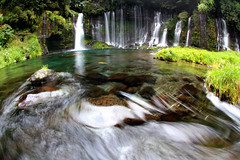 Fish and Shiraito Falls (yamuhaton) Tags: water japan canon sigma falls fisheye shizuoka shiraito