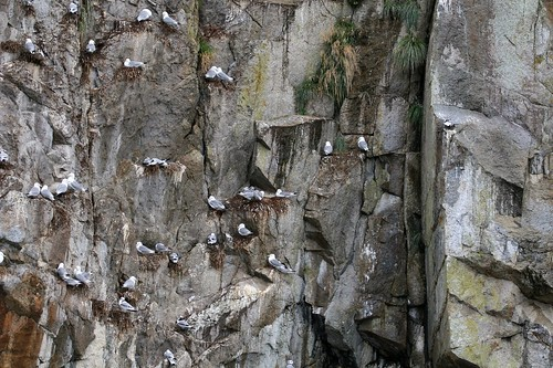 Kittiwake Apartments