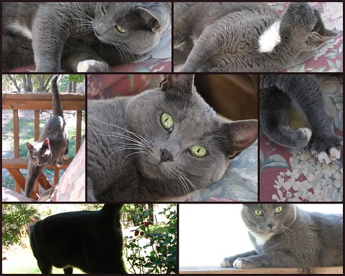 Porch Kitty Collage