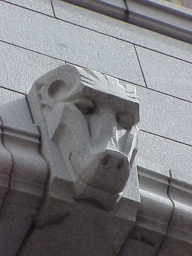 Baboon, Western Cape Legislature, Cape Town