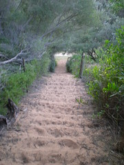Track 1 (cobalt.penguin) Tags: beach dunes sydney peninsula avalon barranjoey