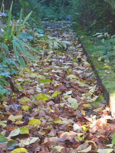 flower bed filled with fallen leaves