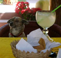 Dog daze after margarita