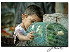 Bird Watcher (J u l i u s) Tags: boy playing green canon 350d xt hands market philippines sigma parrot cage bata julius 70200 leyte 6541 ormoc merkado reblxt ormoccity sabelino