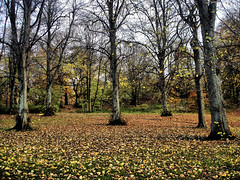 Autumn Fantasy (kezwan) Tags: autumn tree gteborg sweden fantasy sverige hst slottskogen kezwan