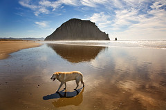 Bluebelle and the Rock (Mimi Ditchie) Tags: california getty morrobay morrorock gettyimages golddragon mywinners abigfave ultimateshot theunforgettablepictures overtheexcellence tup2 damniwishidtakenthat mimiditchie