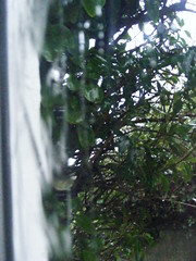 Rainy window life... (Warphobbler-Kaz) Tags: trees rain ivy stormy hedge lane aceofspades mywindow doubleglazing fogandrain anythingtodowithwater imuniquecreative inspirationfromtheimagination vientoenpopa showmemagic passionateinspirations thebestvisions medelerious fallingoffmywalkingframe leakygutter