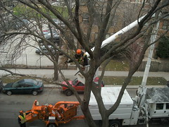 Tree Trimming at last