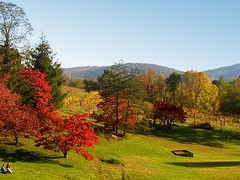 Picnic in a Virginia Vineyard (Kurlylox1) Tags: autumn trees red mountains fall colors field golden virginia vineyard vines picnic wine hills winery grapes blueridge grapevines nakedmountain abigfave