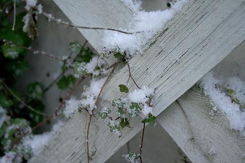 erster schnee zaun02
