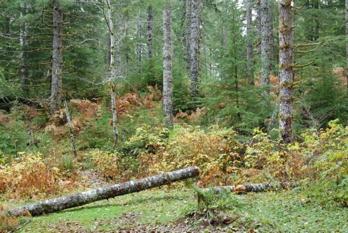 woods_not_flat