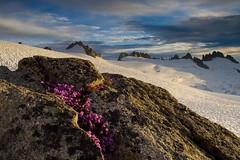 Eldorado (velvia rules!) Tags: flowers sunset mountain snow landscape washington eldorado glacier vista northcascadesnationalpark
