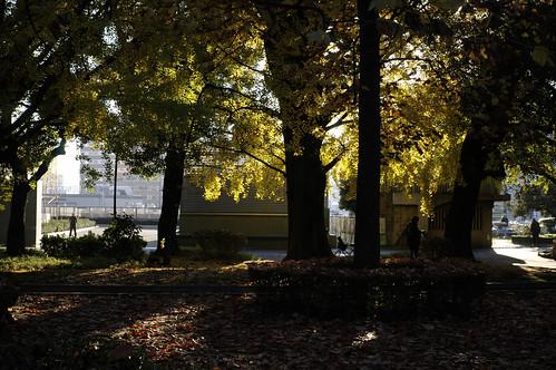上野・公園の朝