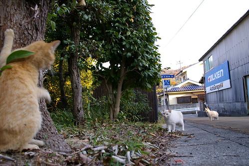 Stray Cat #22