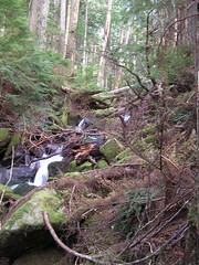 Mason Creek tumbling through the woods
