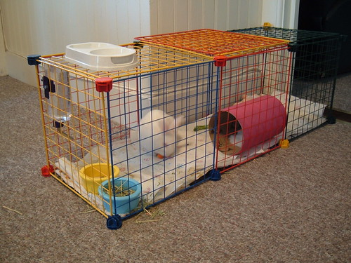 gus's first makeshift cage
