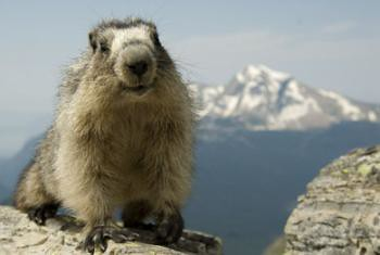 Marmot and Haven's Peak