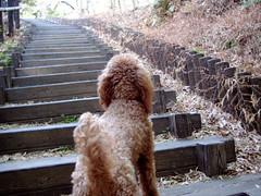 階段とりんちゃん
