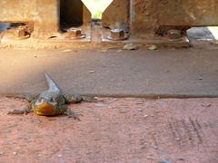 cataratas 291 (littlest-things>) Tags: naturaleza brown animal puente paisaje iguana animales criaturas reptil tornillos