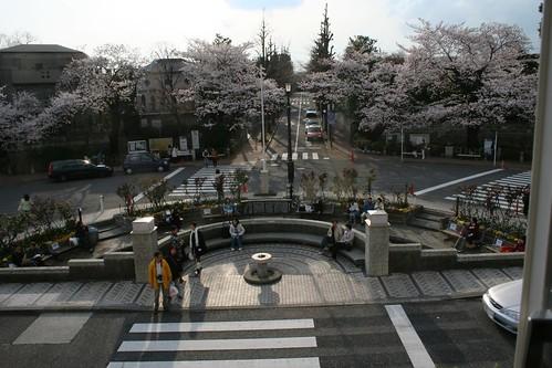 printemps de denenchofu