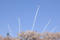 First shot (miwa**) Tags: pink sky flower japan d50 airplane spring nikon aircraft  cherryblossom sakura 28105mmf3545d nikkor 2008 miwa blueimpulse jasdf supershot  impressedbeauty superbmasterpiece goldstaraward