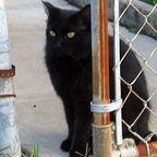 Kinship Circle - 2008-04-12 - Still Healing, One Animal At A Time 04