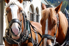 Horses (Namisan) Tags: horse castle germany tourist neuschwanstein newschwanstein