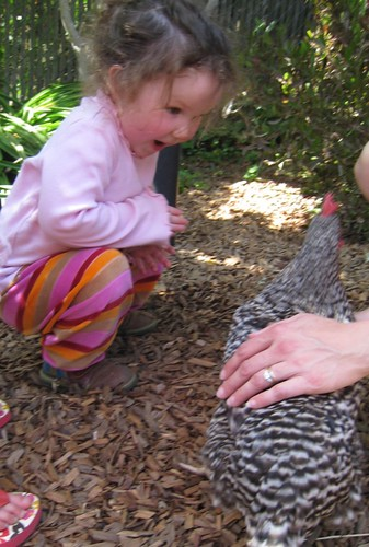 Mali Meets the Urban Chickens!