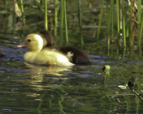 Reedy Pond-21