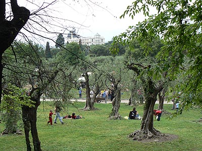 l'oliveraie des jardins de Cimiez.jpg