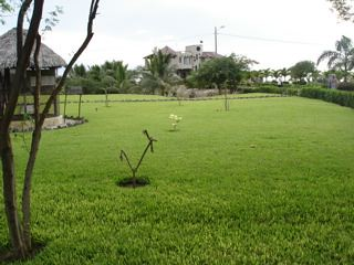 Ecuador-beach-property-for-sale-front yard
