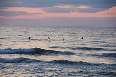 Morning Flight (scott185 (the original)) Tags: sky birds clouds sunrise nc waves northcarolina atlanticocean carolinabeach newhanovercounty anawesomeshot theperfectphotographer salveanatureza llovemypics