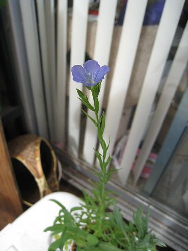 I made a flower