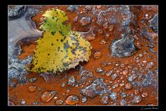 valmasino 02 (daniele passoni (pax)) Tags: nikon d70 foglia roccia acqua soe gocce naturesfinest supershot valmasino bej mywinners abigfave flickrdiamond theperfectphotographer