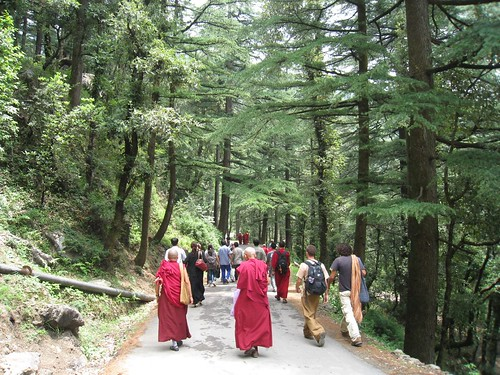 Walking back to town through the pine forest