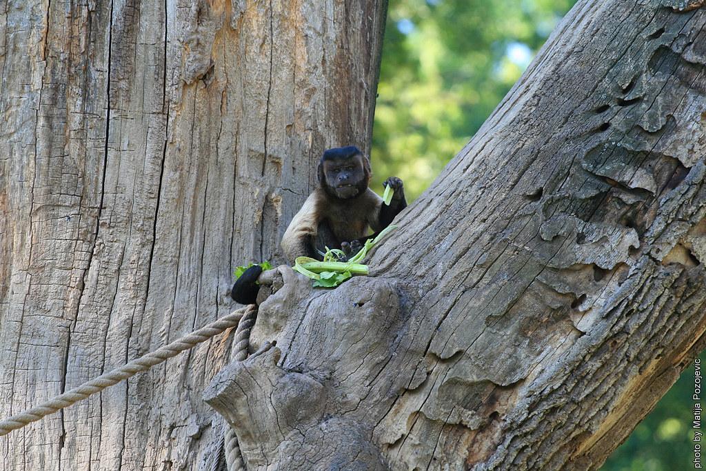 trunk majmun dating dating koji je nivea iz 2012. godine