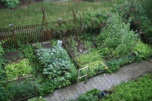 rain on my garden 3