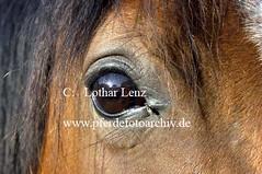 lz270603(40) (Lothar Lenz) Tags: auge shagyaaraber