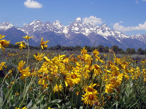 Tetons from Antelope Flats