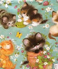 cute kitten wrap (lorryx3) Tags: butterfly kitten turtle fluffy vintagewrappingpaper