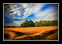The first day of Harvest. (Tarquin's Photography.) Tags: canon landscape corn farm harvest loveit crop