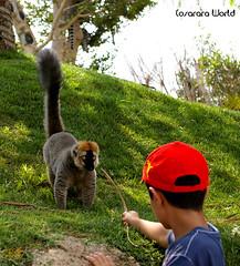 Pincha al mono.