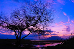 Nathaniel (frborj) Tags: blue sunset tree nikon philippines ricefield pampanga unpopular d40 mtarayat leaveless candaba aplusphoto theperfectphotographer frborj inspiredbyhim
