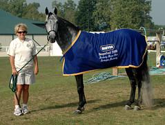 World Champion Bluegrass Bandit (Martina V.) Tags: park horse walking grey mare tennessee kentucky walker breyerfest kentuckyhorsepark