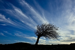 wind (esther**) Tags: wood blue sunset summer sky sunlight black tree nature weather silhouette clouds dark island freedom evening march spring movement bravo europe mood alone power darkness wind dusk dream free atmosphere windy blowing dreaming greece lonely greekislands rhodes onblue xoxoxox interestingness85 interestingness164 interestingness228 xxxooo