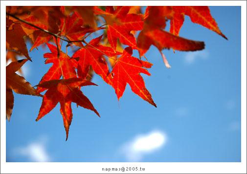DSC_9473.jpg