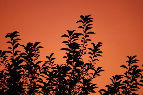 The orange glow...