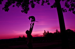 another sun soaked season fades away... (courtney  jade) Tags: pink summer dog greyhound love puppy italian nikon purple catch 365 sillhouette throw quincey d80 courtneyjade