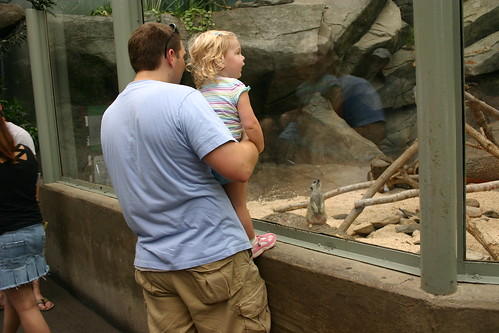 Anna loved the meerkats too